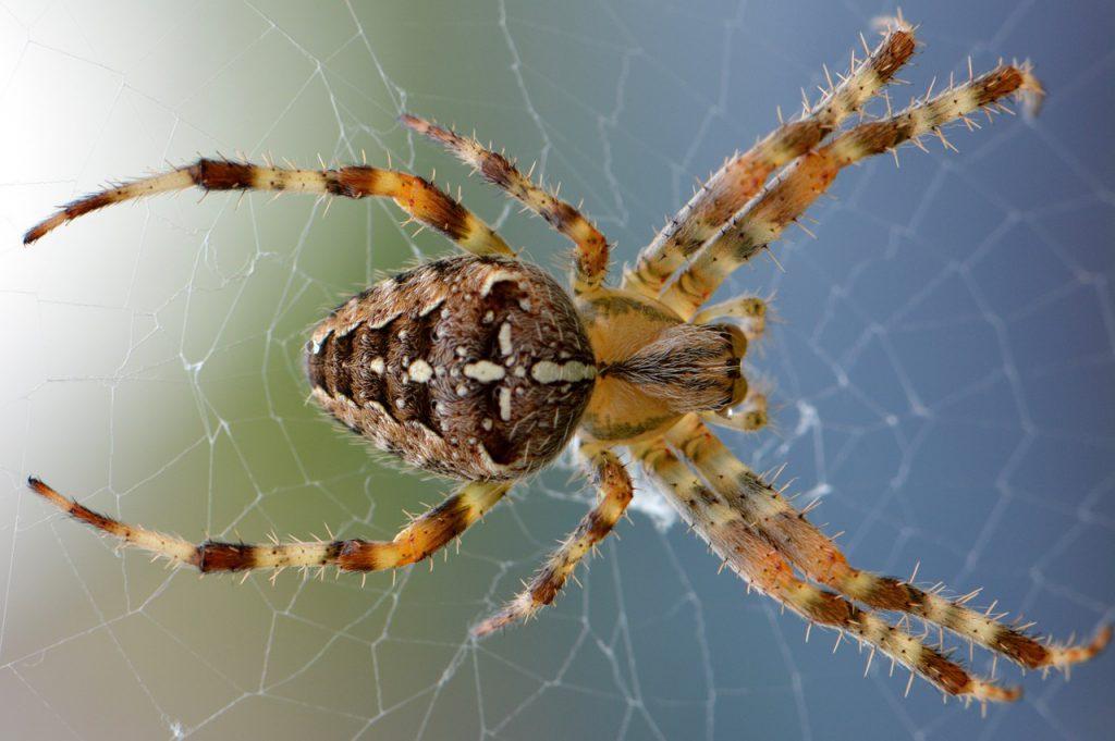 pająki w domu